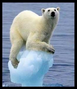 ours-polaire-al-gore